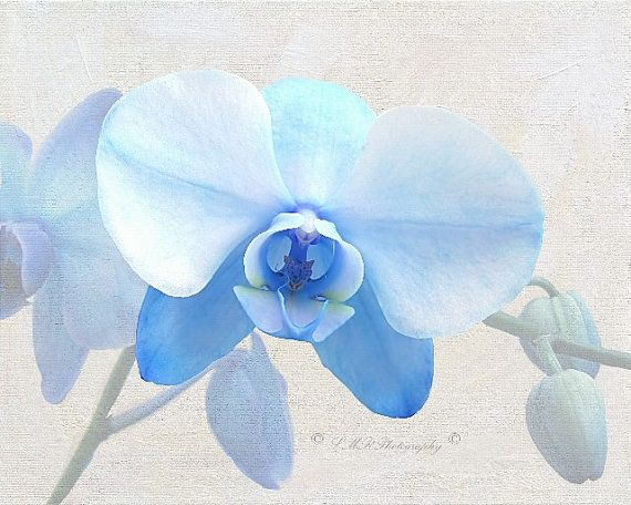Fine Art Photograph Blue Orchid Photograph by LMRPhotography2, $25.00 #fineart #photograph #orchidphoto #etsy