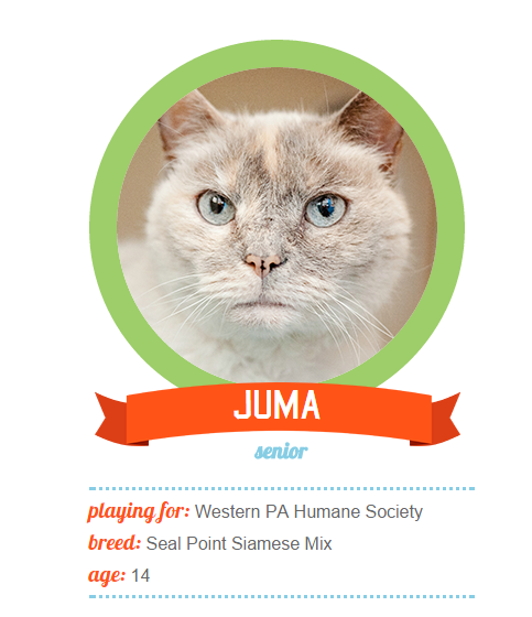 Juma is a veteran seal-point guard with a regal presence on