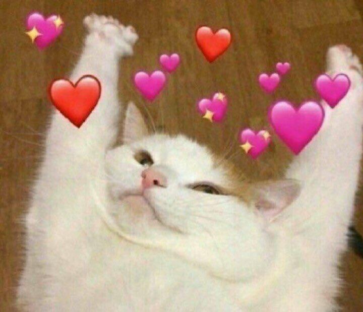 Sun On Twitter Cute Love Memes Cute Memes Cute Cat Memes