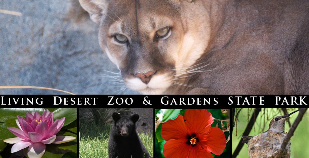 def498306021c2d56888823b89e0b896 - Living Desert Zoo And Gardens State Park New Mexico