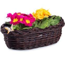 Blumenkasten aus Weide für Balkon dunkel Pelargonie I. B 48 x T 26 x H 14(cm)
