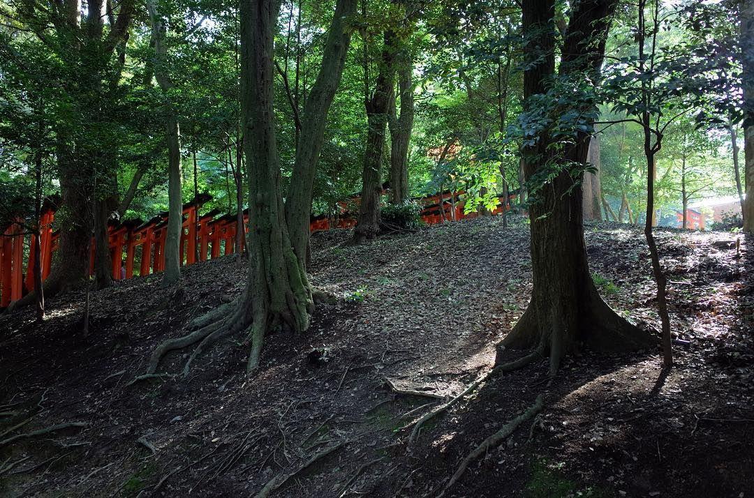 千本鳥居 Gates #kyoto #japan #japantravel  #travel #travelgram