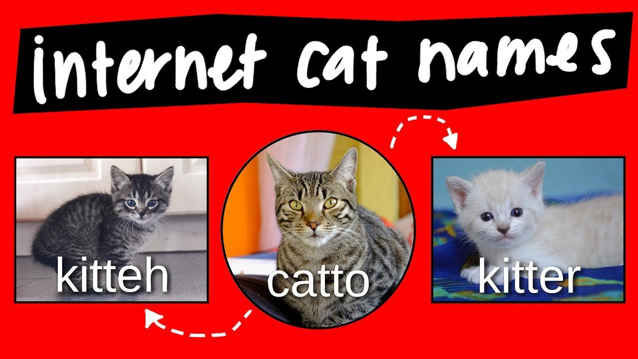 Kitteh Kitter And Catto Internet Names For Cats Internet Cats Cats Cat Names
