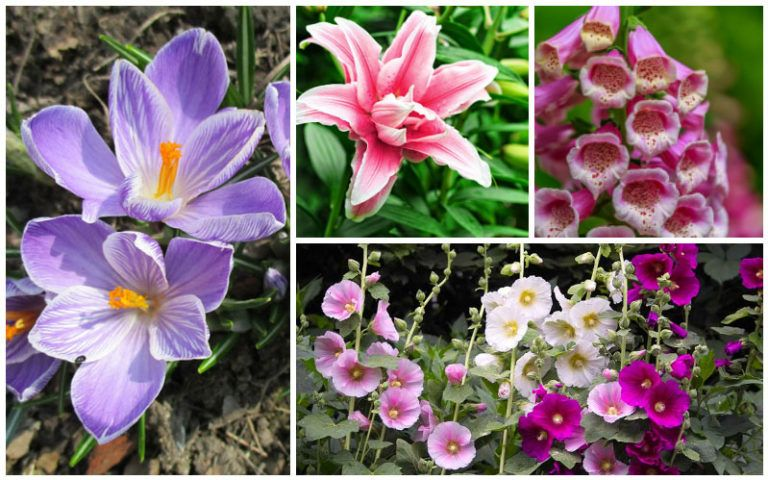15 perennials that grow in zone 5 perennials flowers