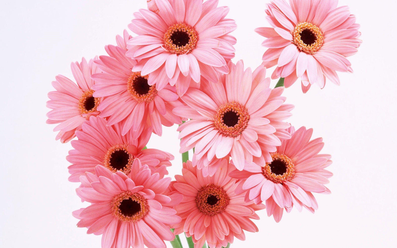 Цветы на открытку картинка