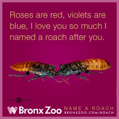 Love You So Much, Roses Are Red, Violets