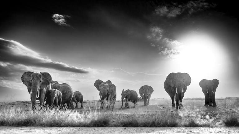 Photo of Original Animal Photography by Jochen Van Dijk | Fine Art Art on Paper | The Departed (unframed) – Limited Edition of 25
