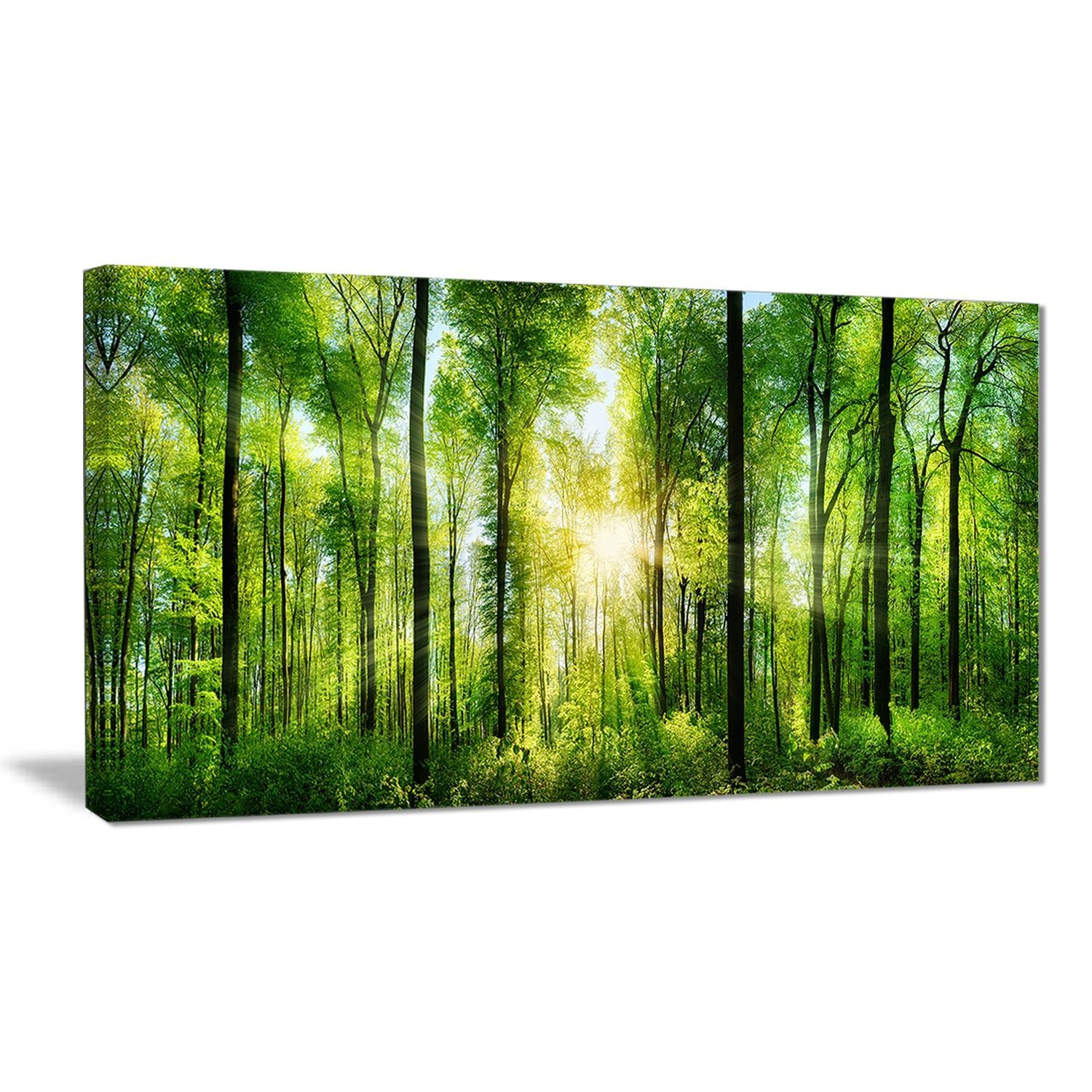 Designart 'Forest with Rays of Sun Panorama' Landscape