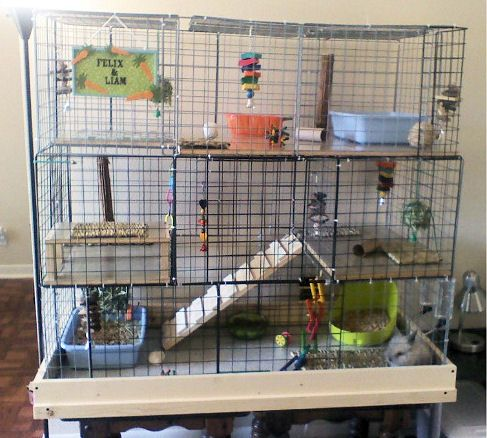 Cube rabbit cage this is large enough for our rabbit and for Guinea pig cages for two