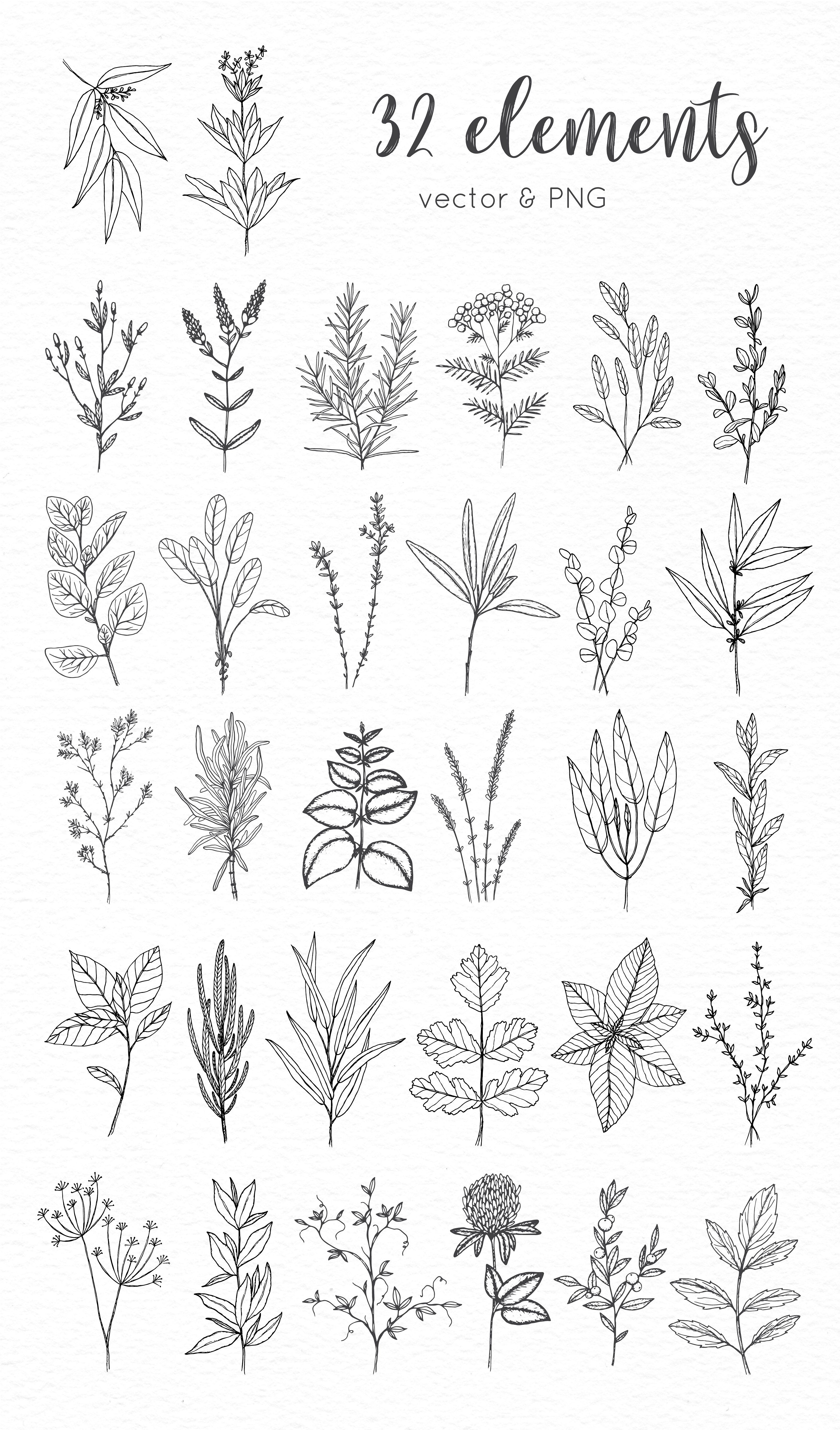 Herbs Hand Drawn Collection Flower Sketches Floral Drawing Flower Drawing