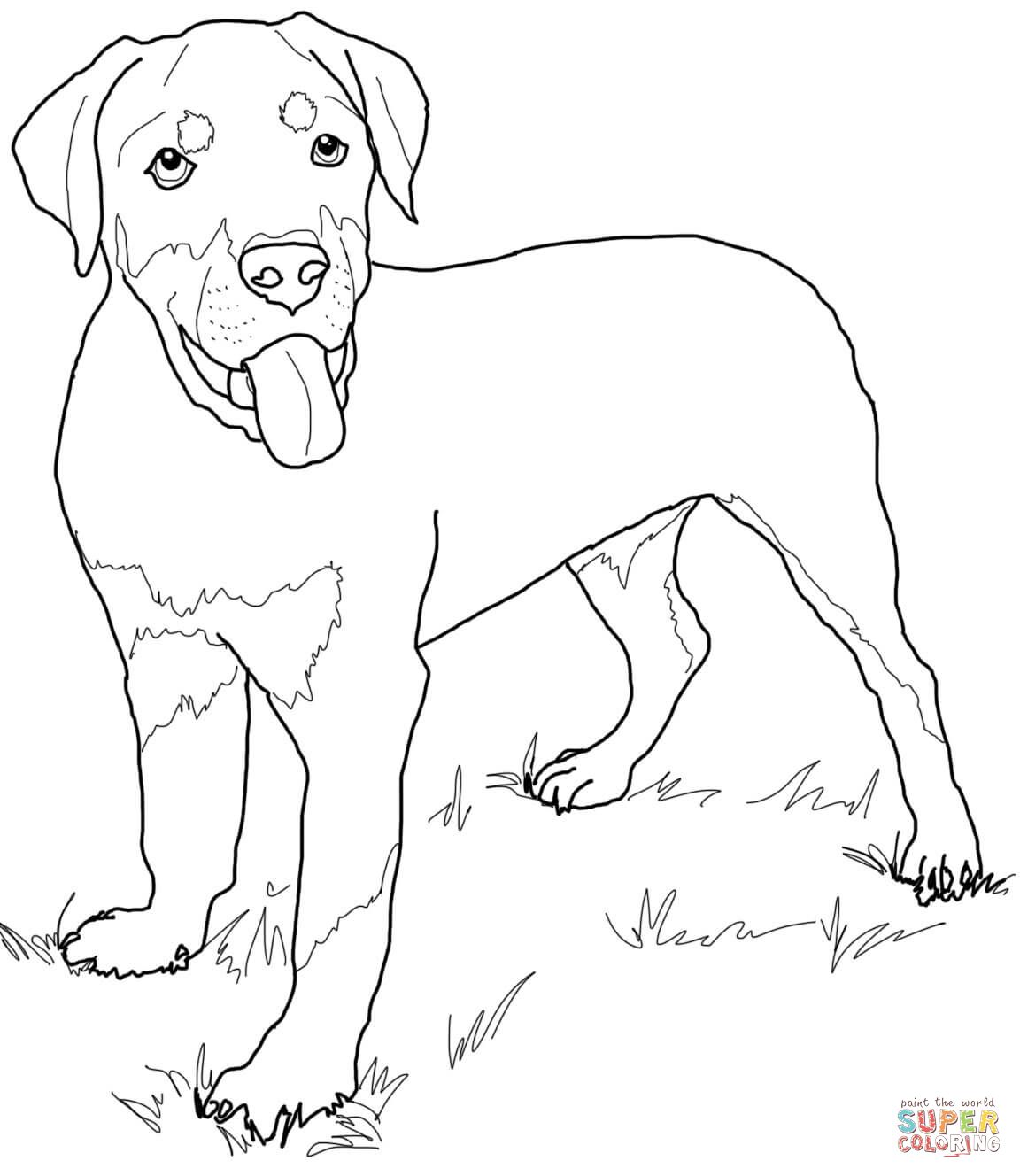 Rottweiler Puppy | Super Coloring | Puppy coloring pages ...