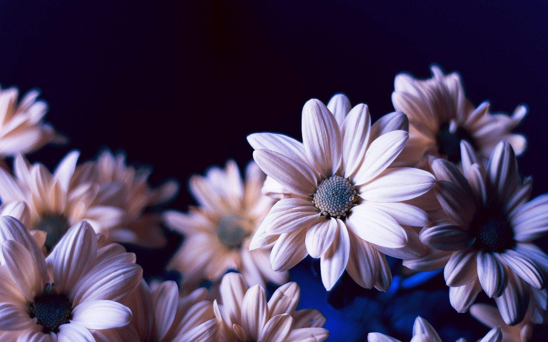 Art spring background fresh flower on blue background Stock
