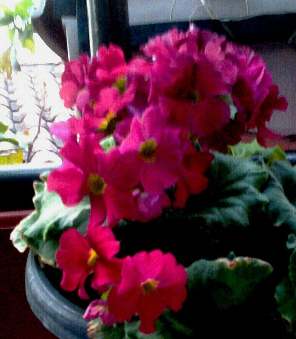Mis Flores Jardines Flores