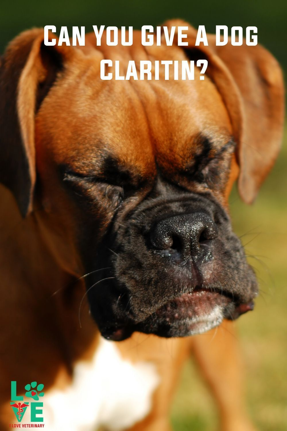 Can You Use Claritin For Dogs I Love Veterinary Dogs Vet