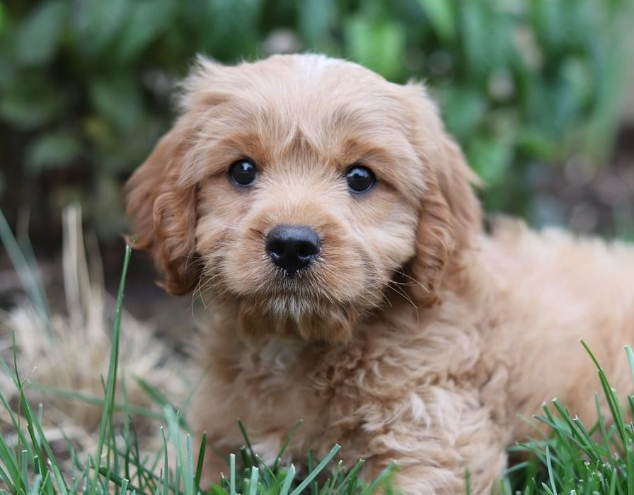 Puppy Or A Teddy Bear Doesn T Matter I M Cute Anyway