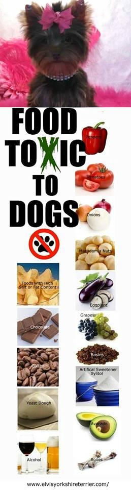 comida tóxica perros