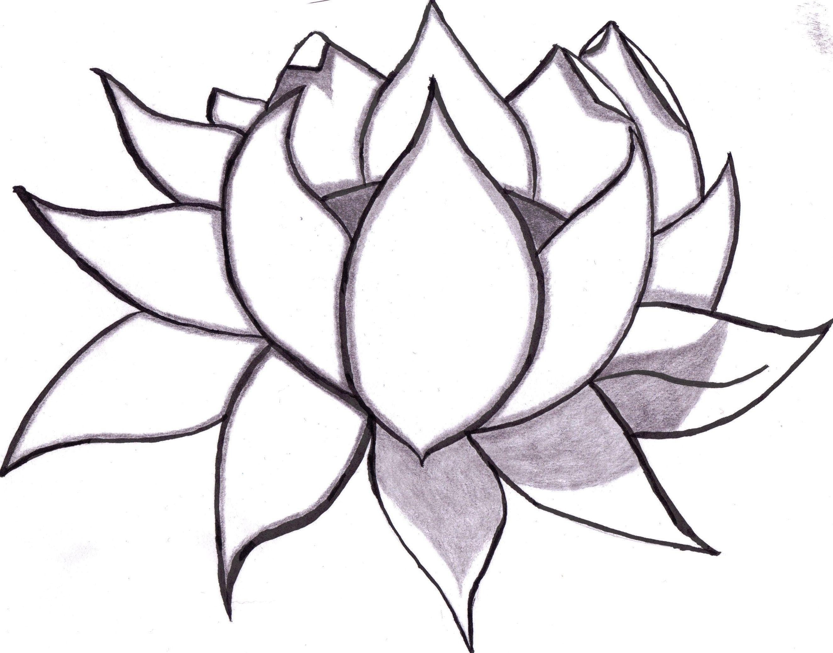 Lotus drawing step by step at lotus flower pinterest lotus drawing step by step at izmirmasajfo