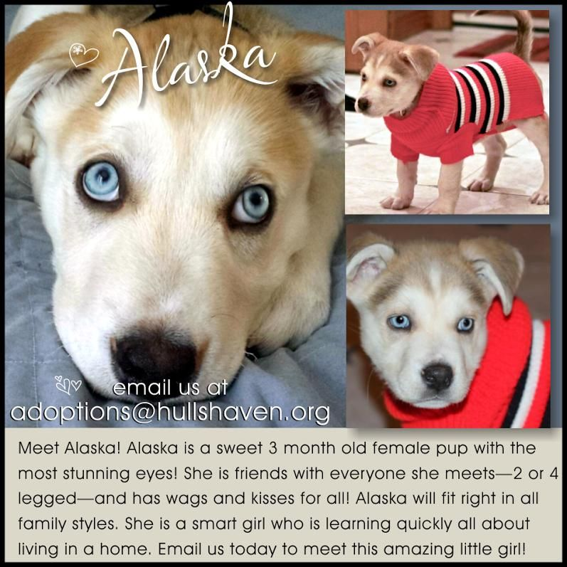 Adopt Alaska On Happy Dogs Puppy Love Dogs