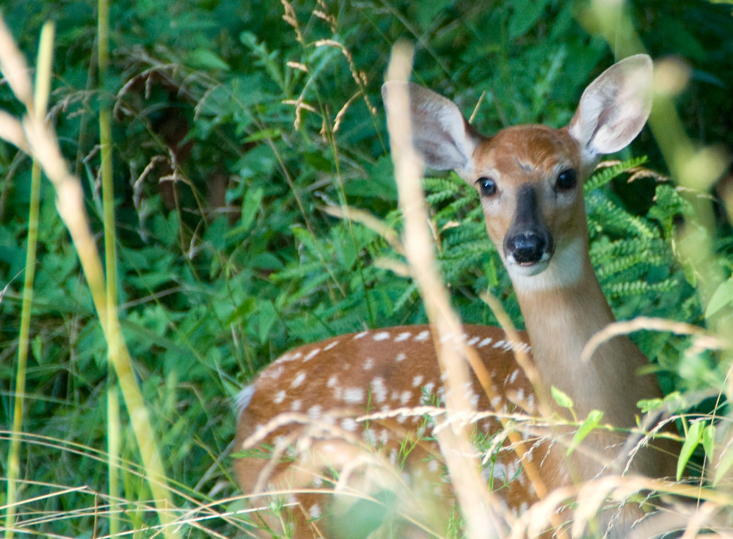 Kirkwood Inn   Guests often spot wildlife when exploring wooded walking paths.  A scenic, yet convenient retreat.