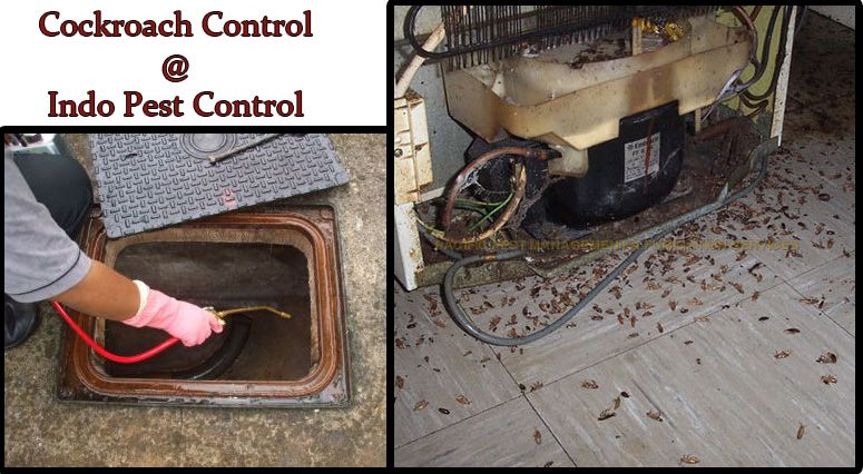 Indopestcontrol‬ cockroach control using innovative solutions for treating cockroaches and avoiding property damage and associated health risks. Also protect your family members and employees from Cockroaches.