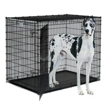 Amazon Com Midwest Solutions 2 Door Large Dog Crate Pet Supplies Large Dog Crate Dog Crate Large Dogs