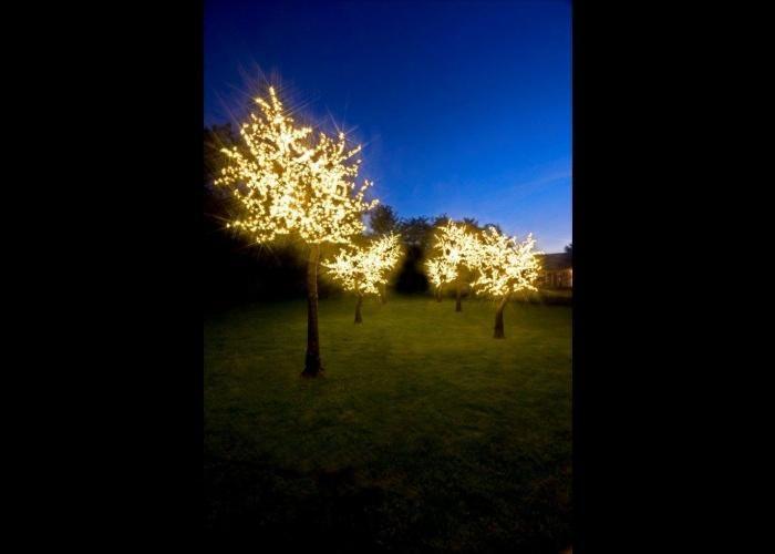 Home Twilight Trees Wisteria Tree Blossom Trees Led Tree