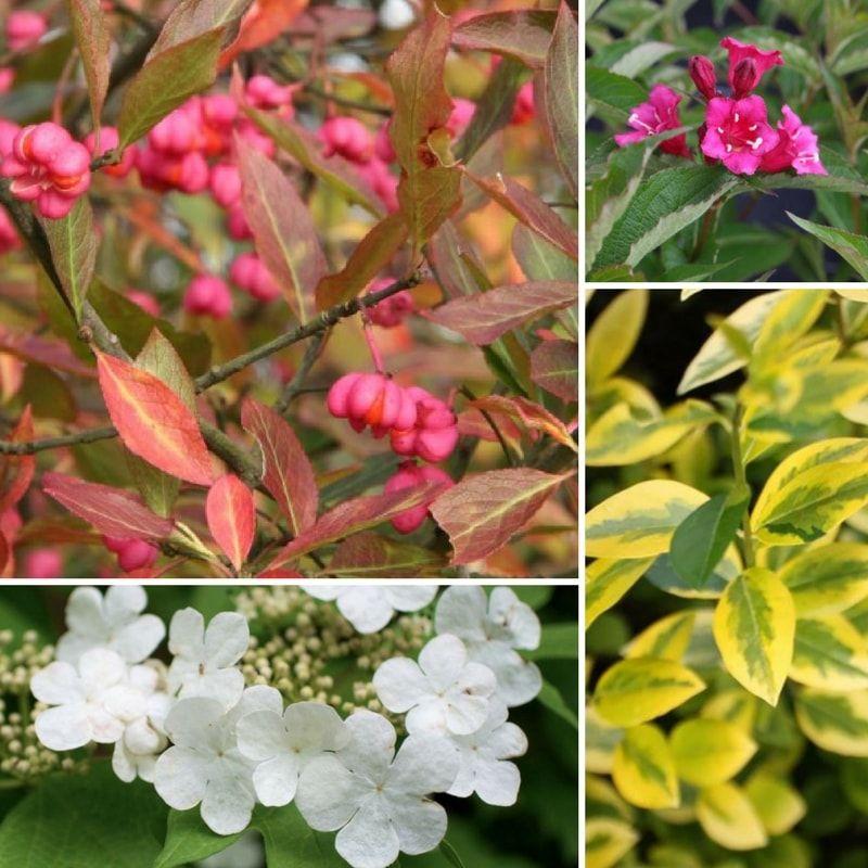 Haie fleurie quels arbustes planter, quand et comment