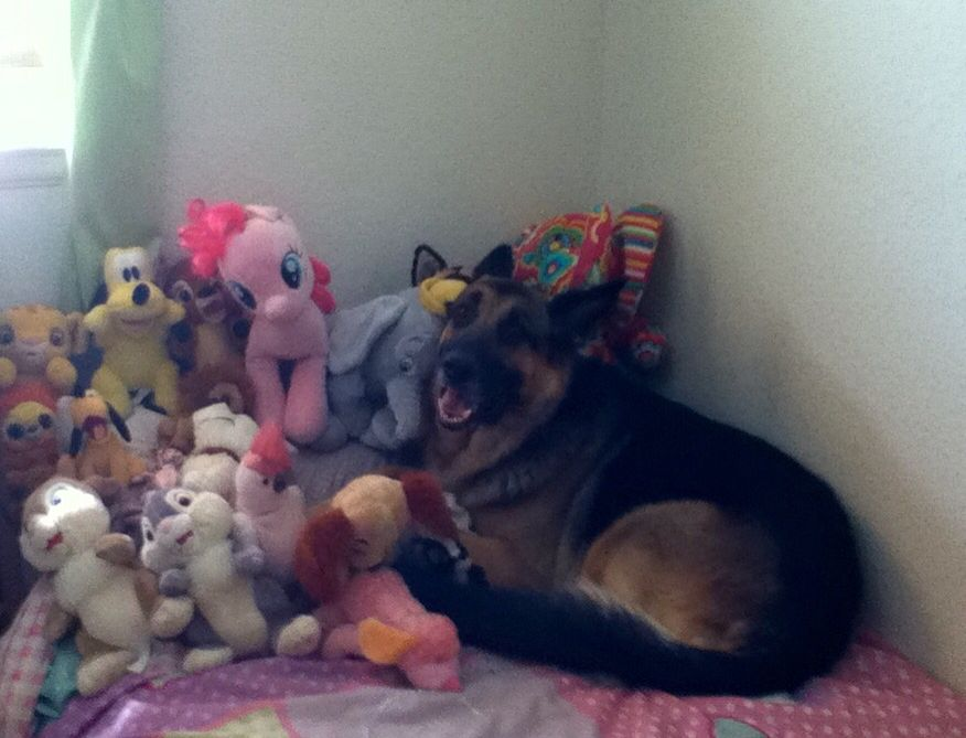 I'm a stuffed animal ..... You will never find me !