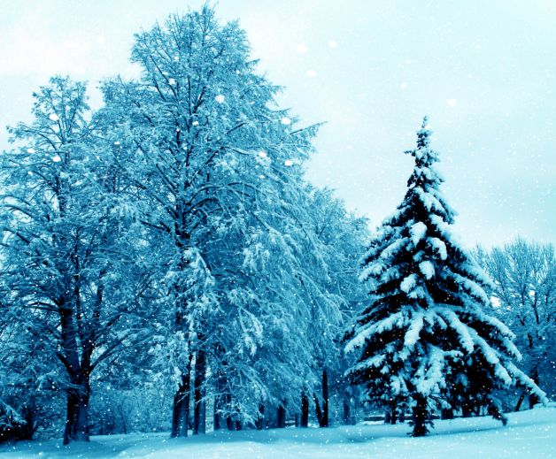 Snowcovered Christmas Tree Among the Trees Landscapes