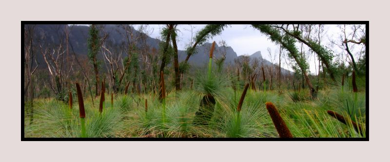 Grass trees, The Grampians, Andrew Brown Australian Landscape Photography