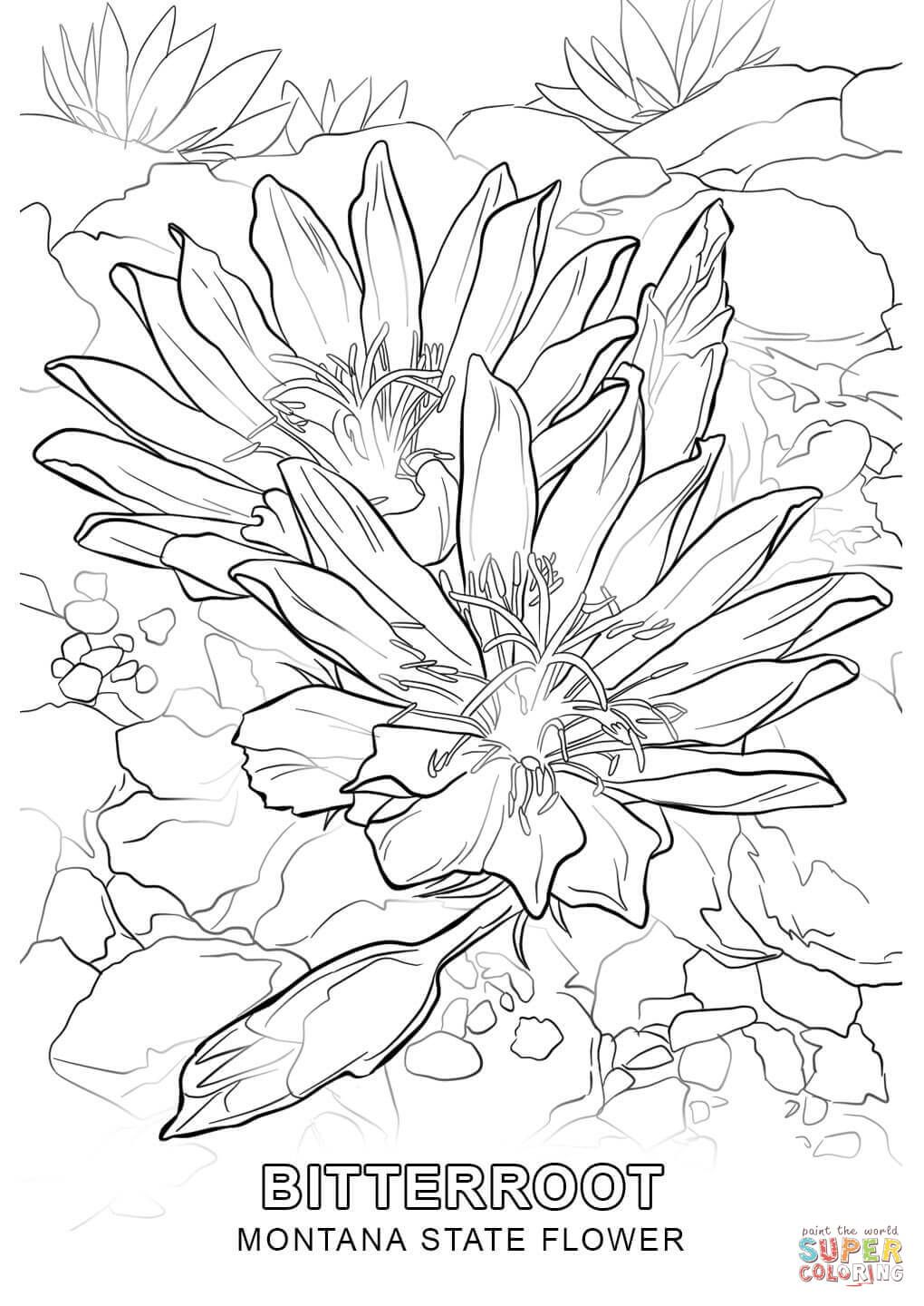 Montana State Flower coloring page Free Printable