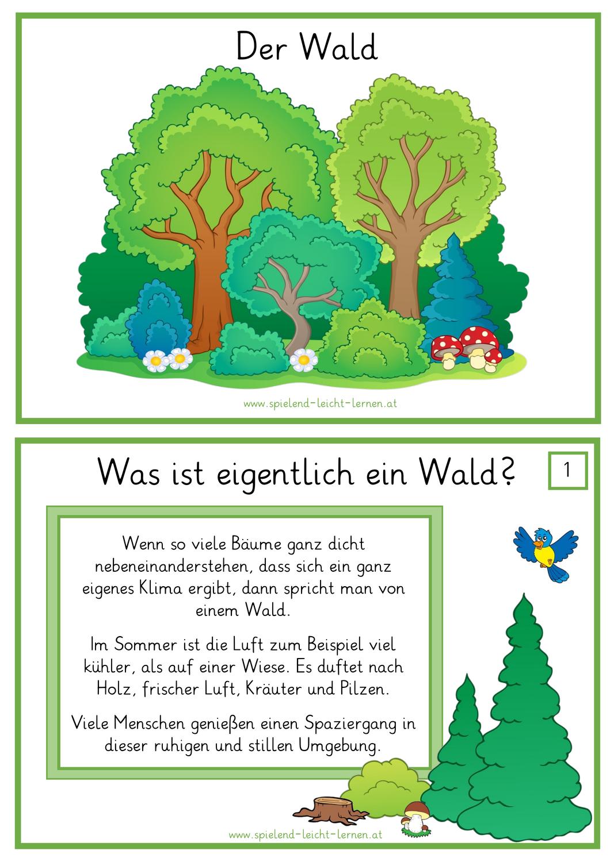 Materialpaket WALD in 20   Wald grundschule, Waldschule, Grundschule