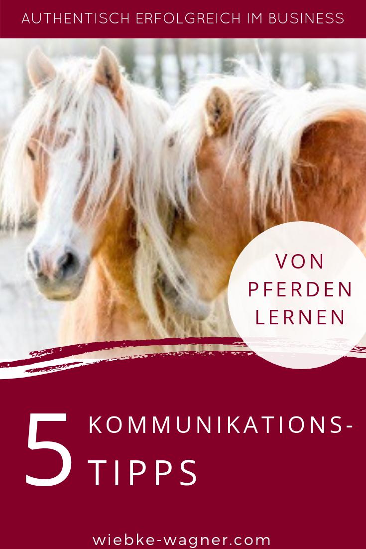 5 Kommunikations Tipps Hier Erfahrst Du Was Du In Sachen Kommunikation Von Pferden Lernen Lernen Kommunikation Tipps