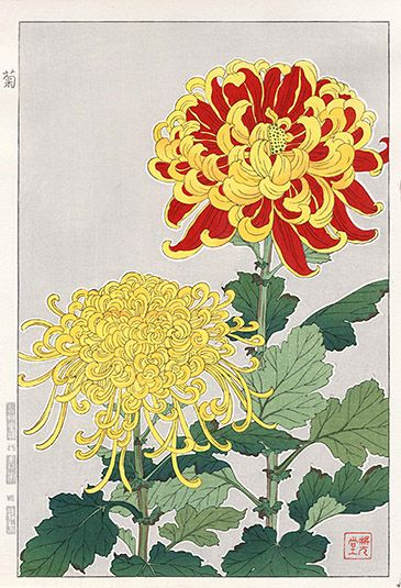 Chrysanthemum SKJ15 $125 Shodo Kawarazaki Spring Flower Woodblock Prints