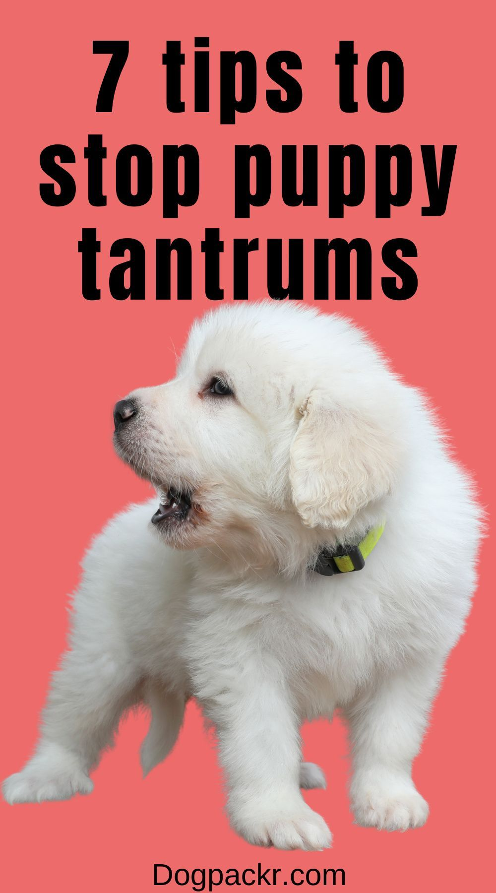 How To Deal With Puppy Tantrums 7 Tips To Stop Them Dogpackr In 2021 Puppies Hyper Dog Tantrums