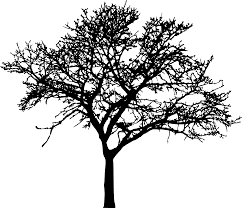 Tree Silhouette Png Art Black And White Branch Clipart Design Art Black Branch Clipart Design Png Silhouette Tr Tree Silhouette Art Silhouette Png
