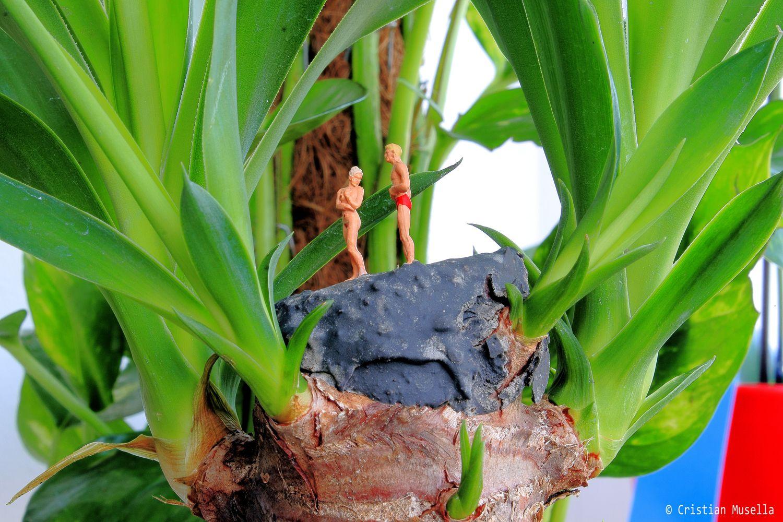 Tronchetto Della Felicità Da Esterno la #yucca aloifolia, nota a tutti come il #tronchetto della