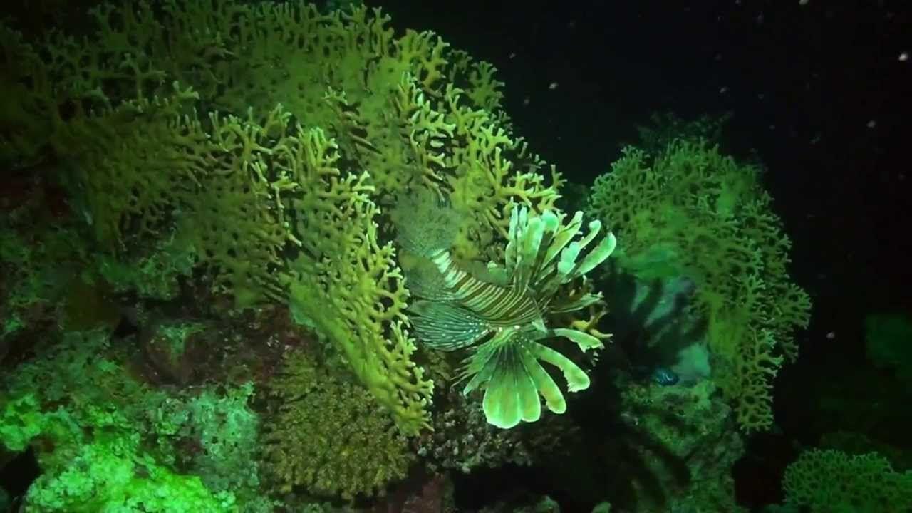 Das Korallenriff - die 4.000er-Marke ist geknackt! ;)