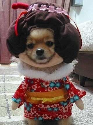 Geisha Dogs Cute Animals Pet Costumes Dog Halloween Costumes
