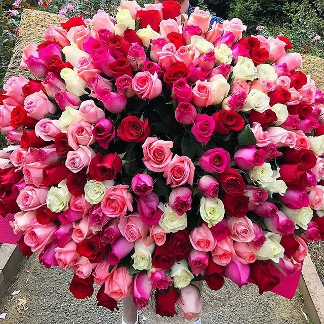 Pinterest Gabk15 Birthday Flowers Bouquet Beautiful Flowers