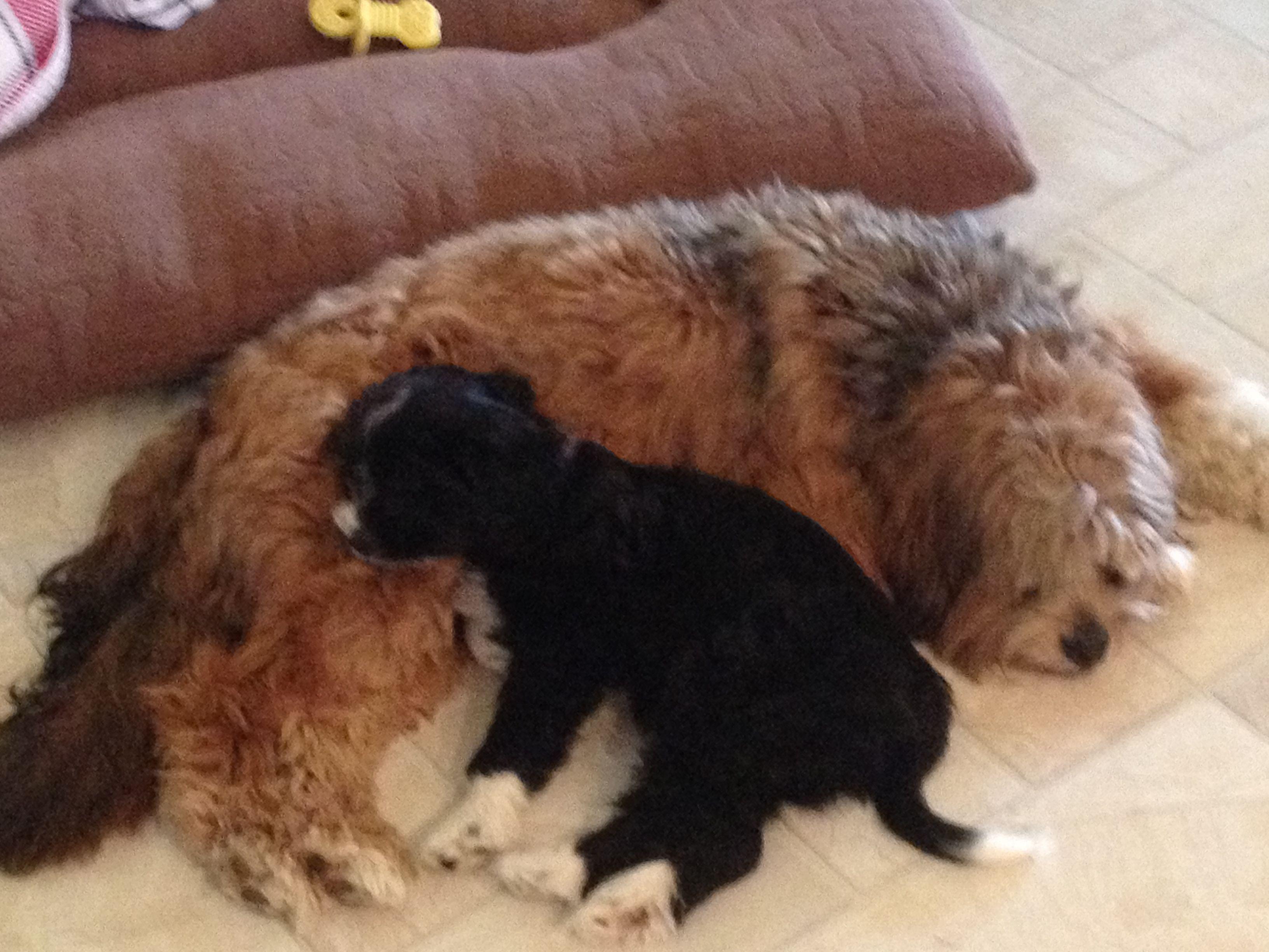 Walter and ellieuc dogs pinterest dog