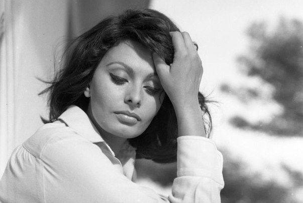 Sophia Loren by Peter Basch, 1963   Sophia loren, Sofia