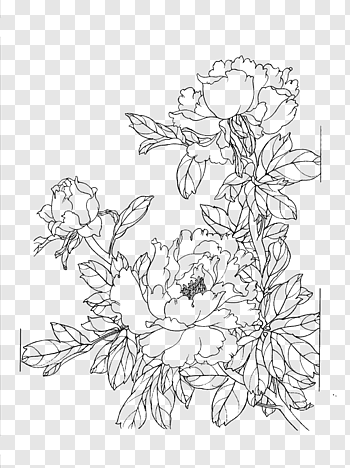 Flowers Drawing Png : flowers, drawing, Drawing,, Peony, Flower, Drawing, Drawings,, White, Floral, Illustration