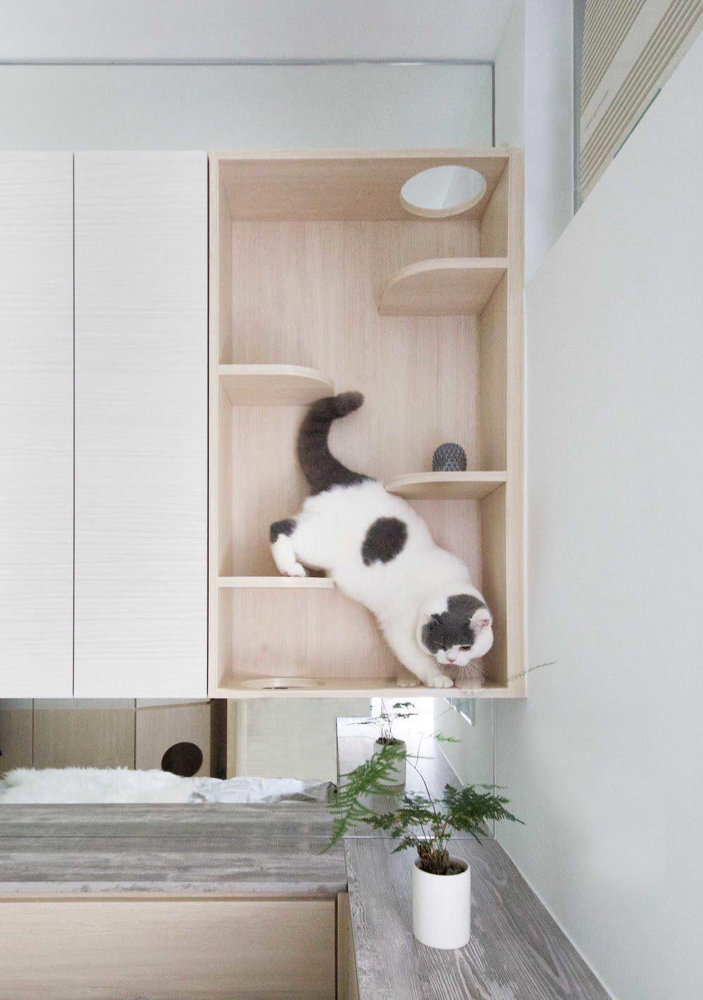 Cheap Furniture San Diego Lowcostfurnitureonlineindia Info 4406696879 Cat Furniture Design Micro Apartment Residential Interior Design