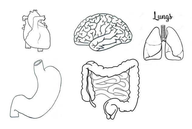 Manualidadesconmishijas: El sistema respiratorio y digestivo para ...