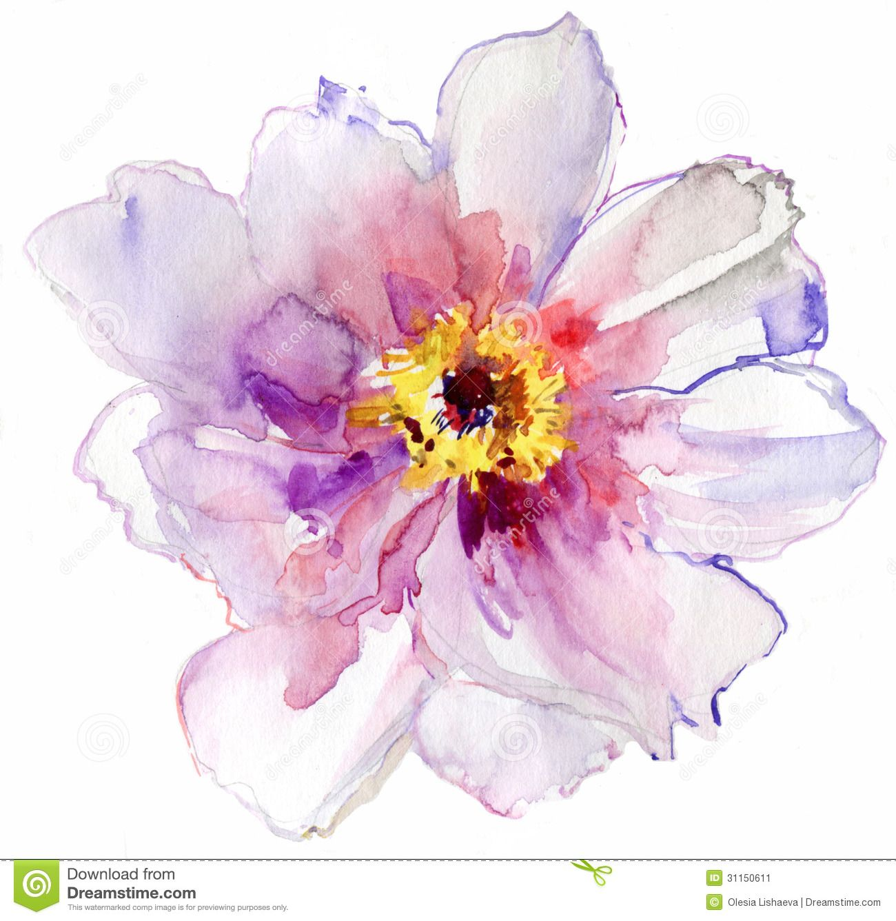 watercolor white flower stock image image 31150611