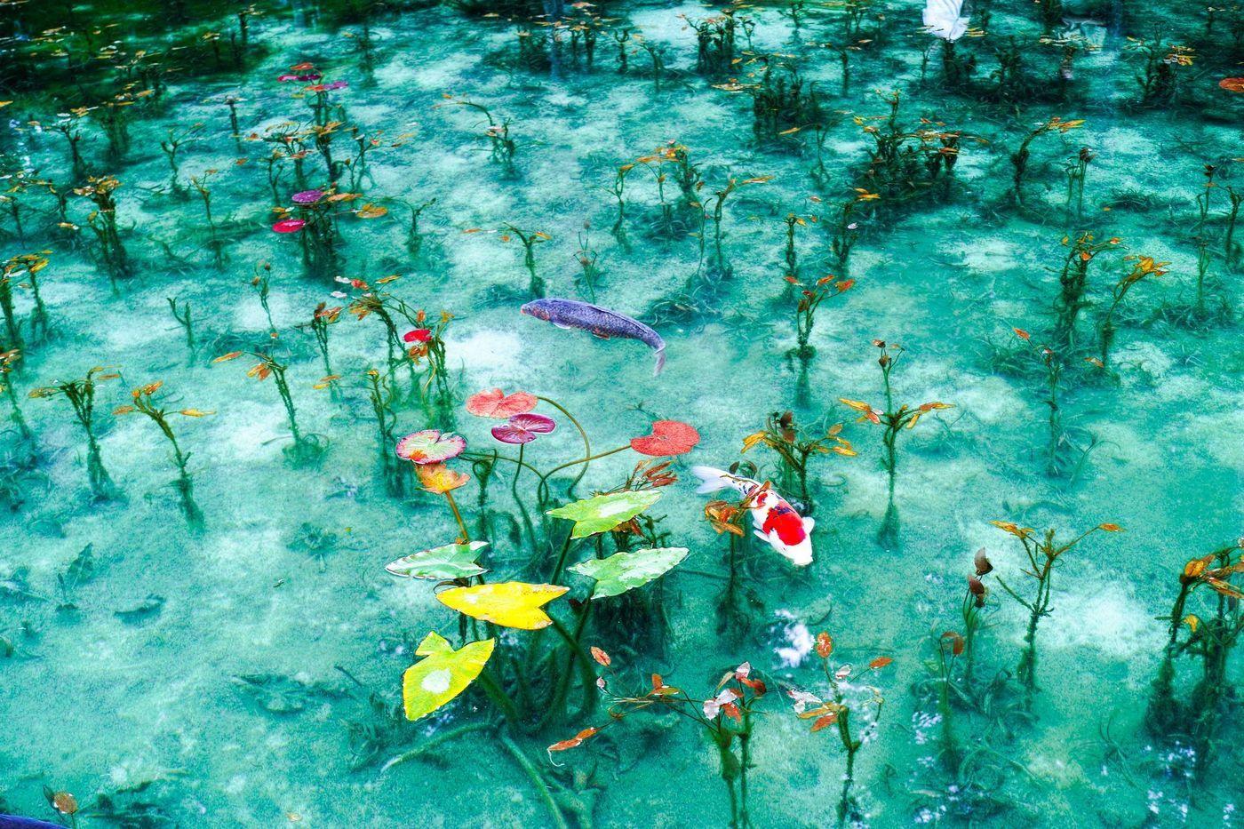 有名どころから穴場まで 東海地方のインスタ映えスポット10選 Aumo アウモ モネ モネの池 旅