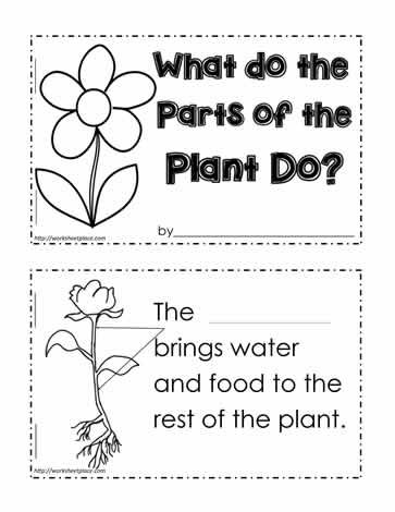 plant functions worksheet teaching pinterest worksheets kindergarten and montessori. Black Bedroom Furniture Sets. Home Design Ideas
