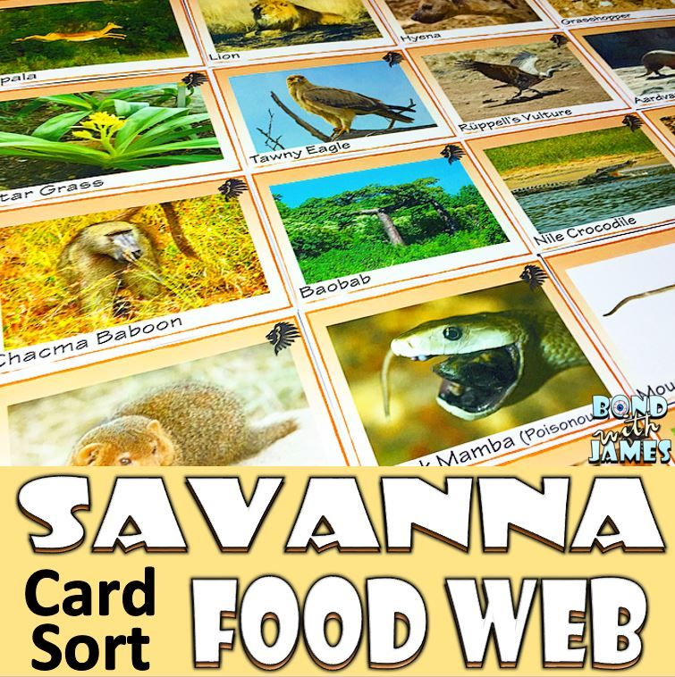 Food Chain and Food Web Savanna Card Sort Trophic level