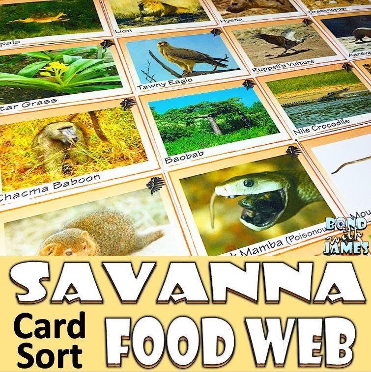 Food Chain and Food Web Savanna Card Sort Trophic level